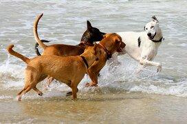 愛犬の安楽死を選んだのはなぜ? 辛い選択をめぐる手続き、配慮、費用…