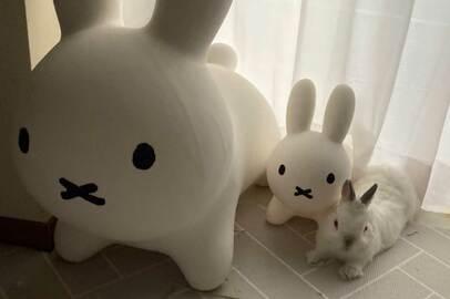 【そっくり】ブルーナボンボンの隣にいたのは、本物のウサギ…!見分けつく?あまりの可愛らしさにツイッター大盛りあがり