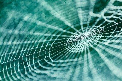 新素材・人工クモ糸のバイオベンチャーSpiber(スパイバー)、IPOへの期待