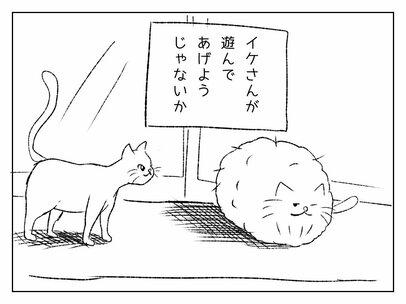 クールで知的。でも実は…!?  モコモコ過ぎる猫「モコ」のお友だちはこんな猫。