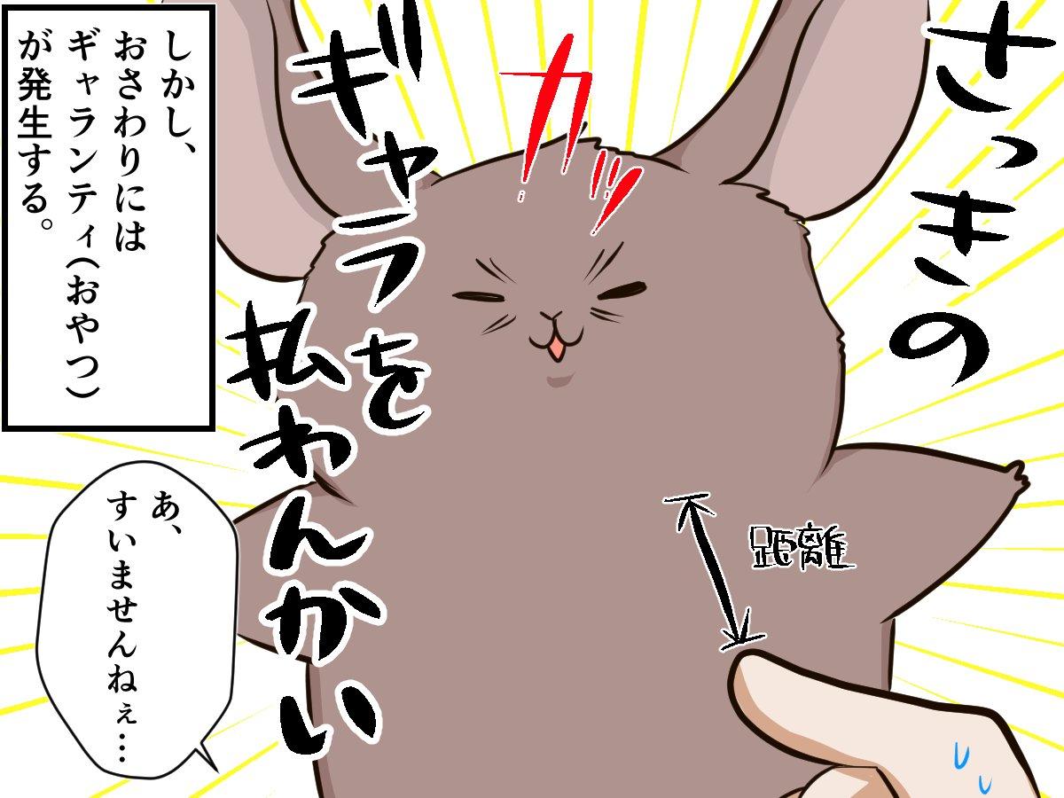 ネコじゃないモフモフ、「チンチラ」のツンデレ行動に夢中!