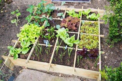 園芸初心者必見!簡単ベランダ菜園の節約術