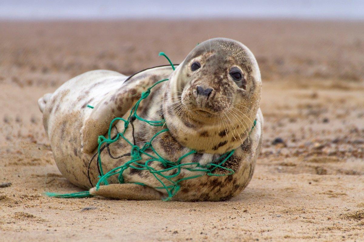 世界を繋ぐ海を守るために~海を取り巻く諸問題を考える~