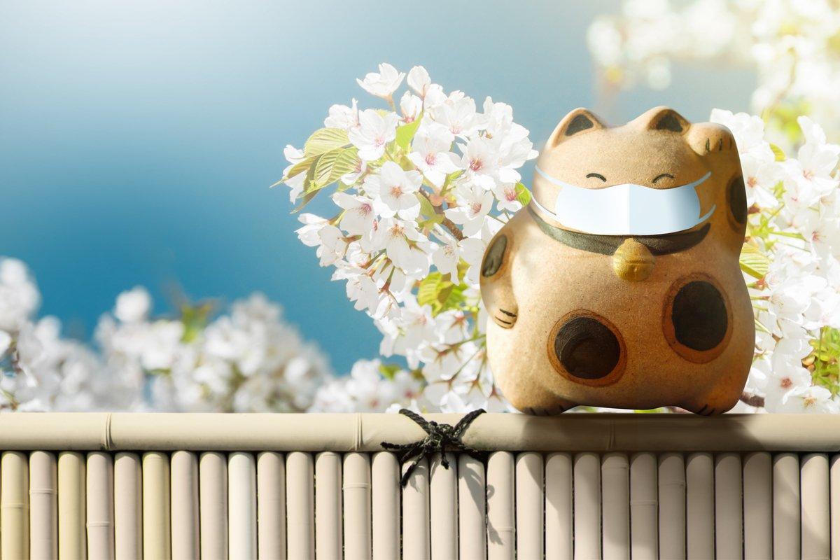 【麻羽たんぽぽの4月金運占い】12星座別!あなたの金運をアップさせるエネルギーの使い方