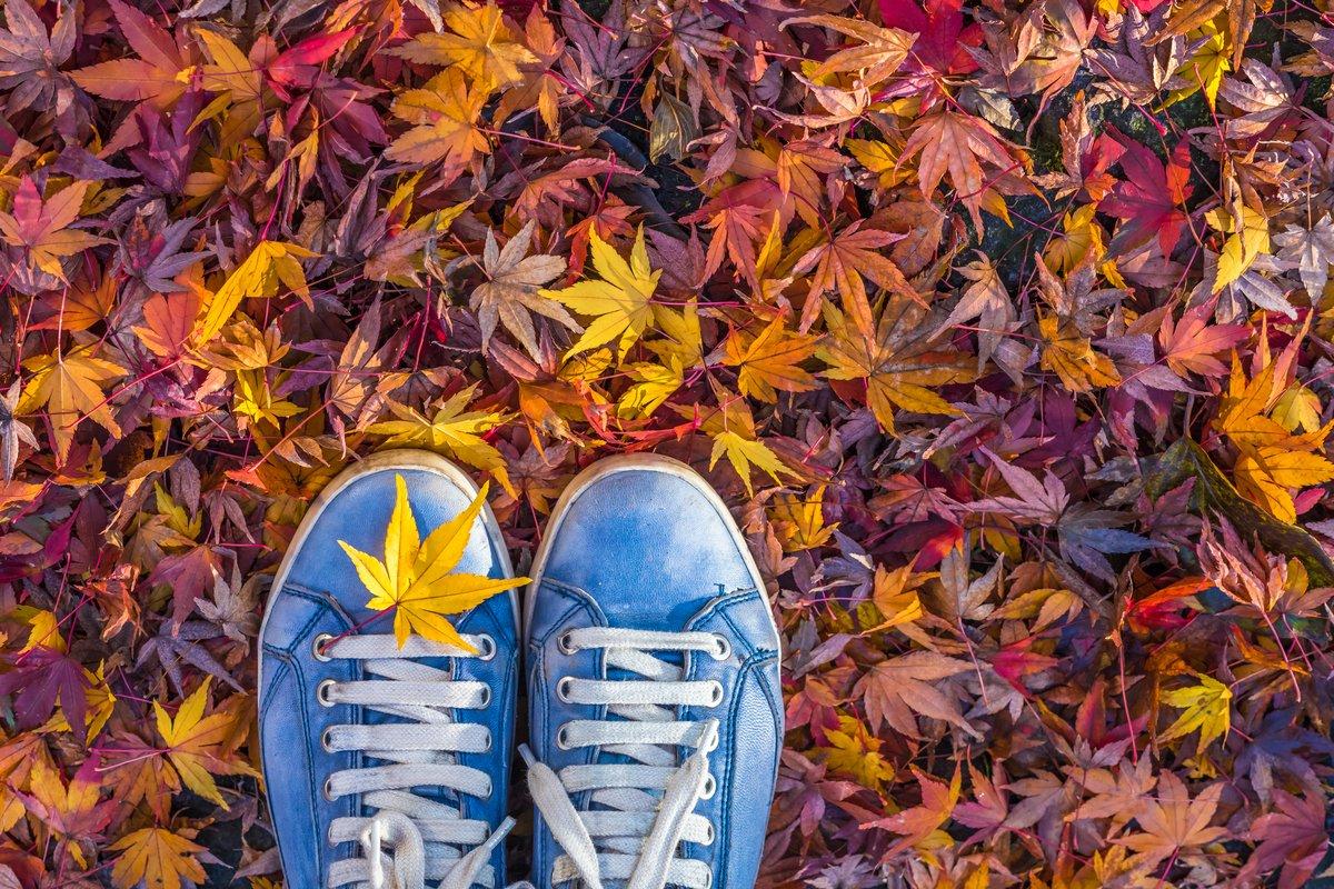 【小林 明美10月の星占い】12星座別「運気をよくする」3つの開運アドバイス