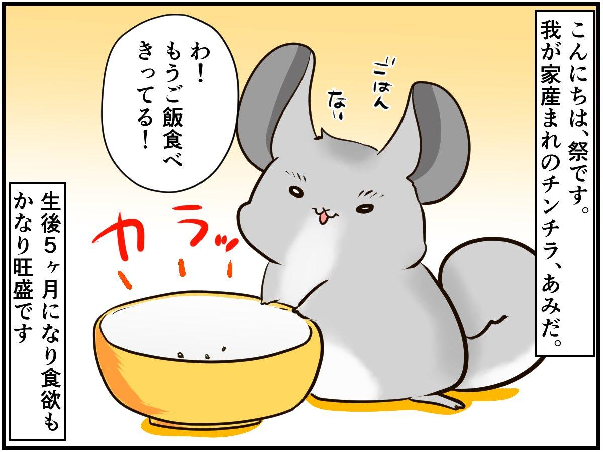 チンチラベビーの食べすぎ抑止に芸を教えてみると...【チンチライフ82話】
