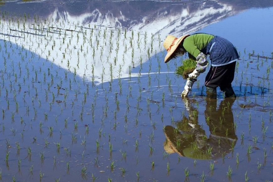 農業が労働力不足なら、農産物の輸入制限を撤廃しよう
