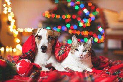 ペット界で「プレミアム化」が進行中!?犬猫を飼う1ヶ月の費用と「もしも」の備え