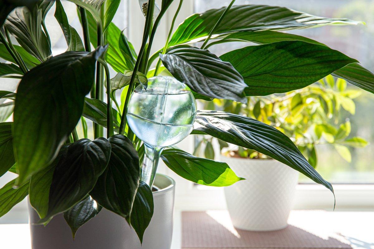 【家庭菜園】自動でできる「旅行中の水やり」100均から手作りグッズまで紹介