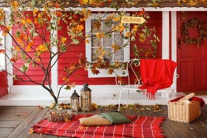 【ガーデニング】鉢植えで育てる庭木、紅葉がキレイなオススメ4選!