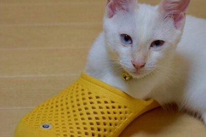 ドヤ顔でスリッパに突っ込むミサイル猫。7匹の愛猫が変えた「私の人生」