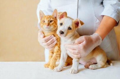 犬・猫にマイクロチップ義務化!どうすればよいか