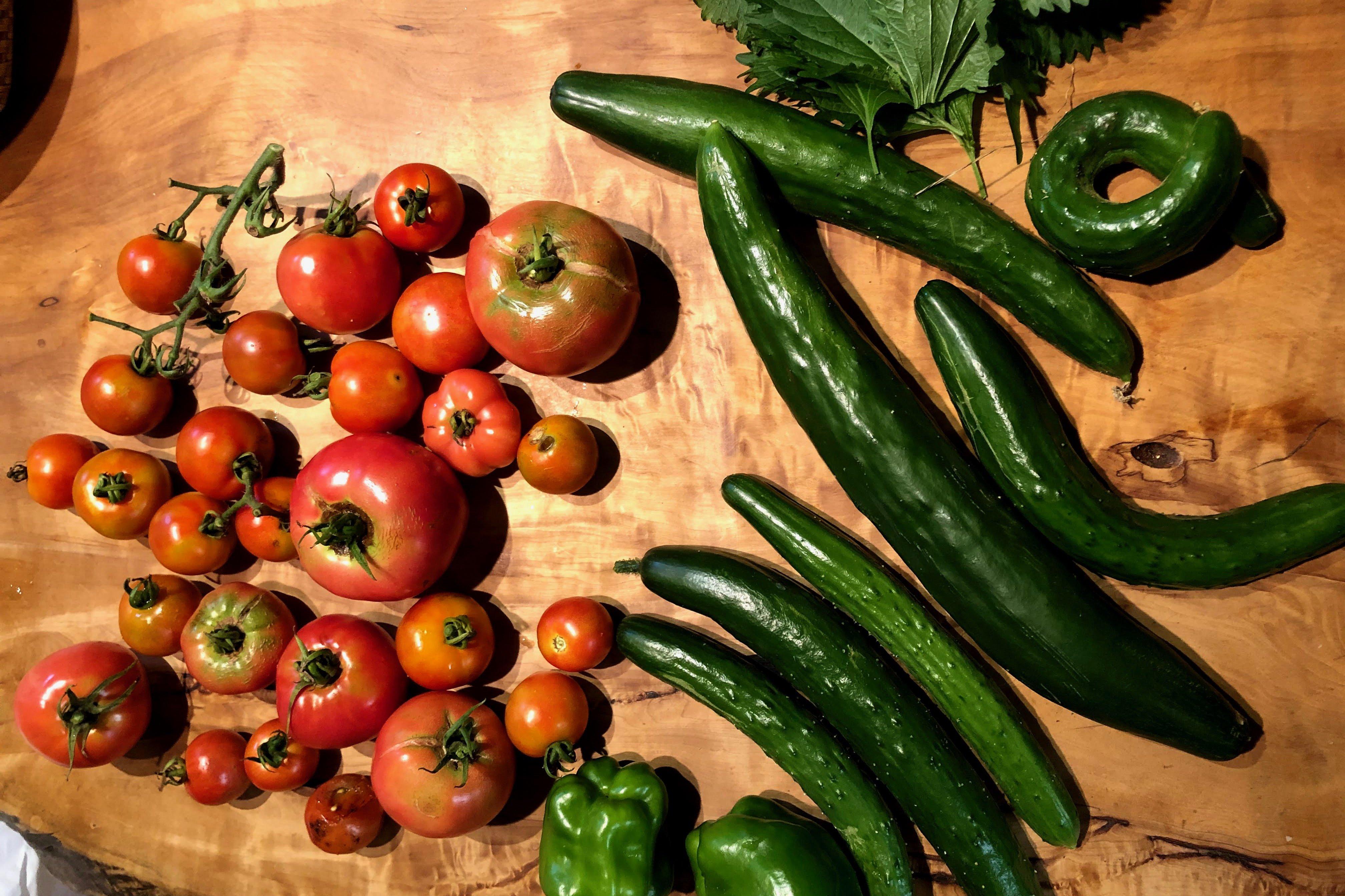自分が食べる野菜は自分で作る。今、家庭菜園が流行るワケ