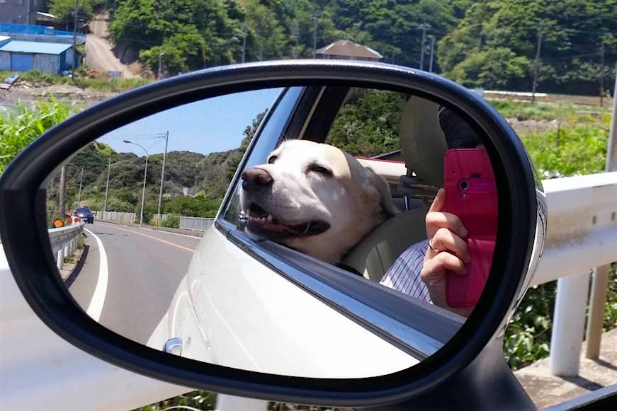わんこと出かける気ままなドライブは至福の時間