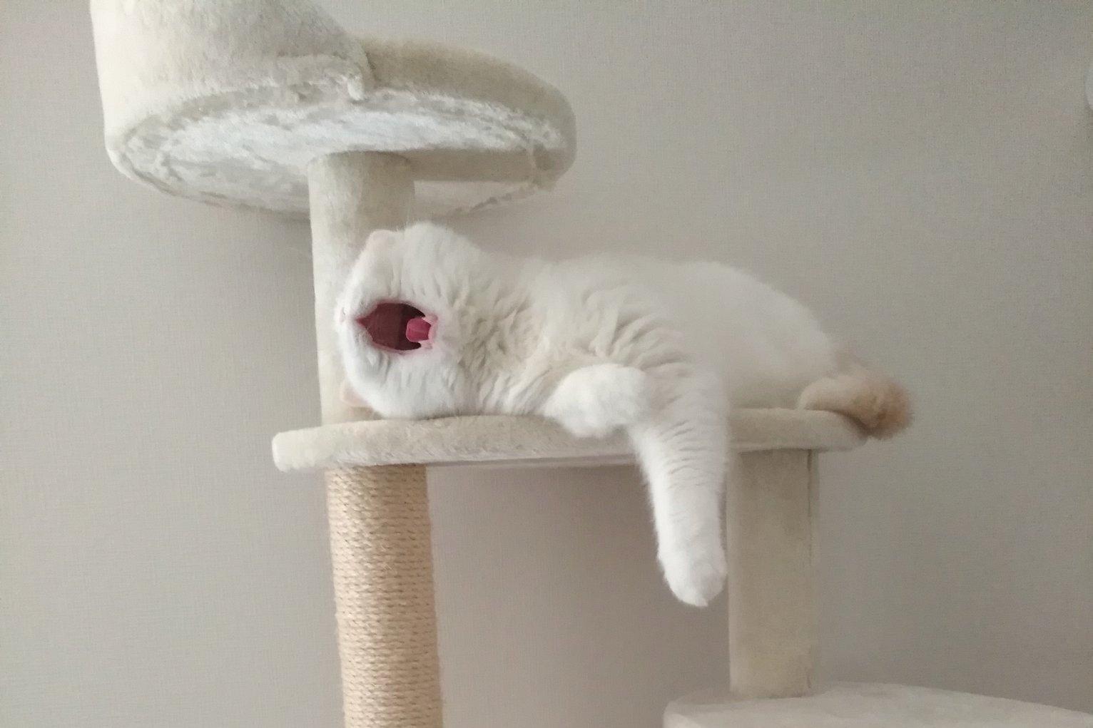 これは未確認生命体…?愛猫の「怖かわいい」あくび姿が話題に