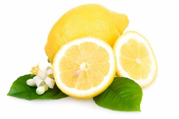 「鉢植えレモン」の育て方、葉や花のさわやかな香りを楽しもう!