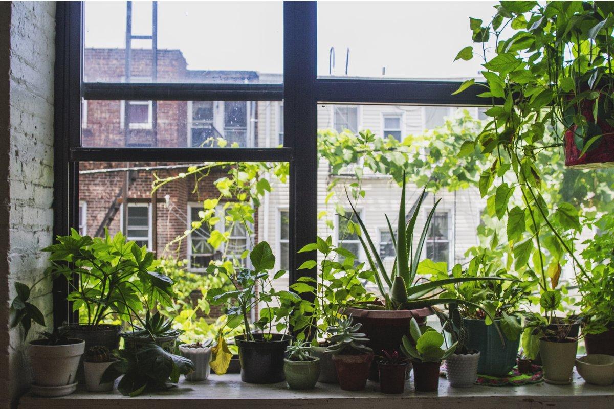 初心者でも育てやすい!オススメ観葉植物8選、インテリアがおしゃれに