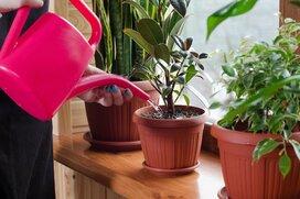 おしゃれな観葉植物、初心者でも育てやすいオススメ3選