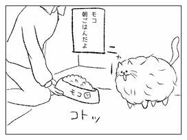 モコモコ過ぎる猫「モコ」の意外な動きに癒されまくる「みちこちゃん」を見てみよう