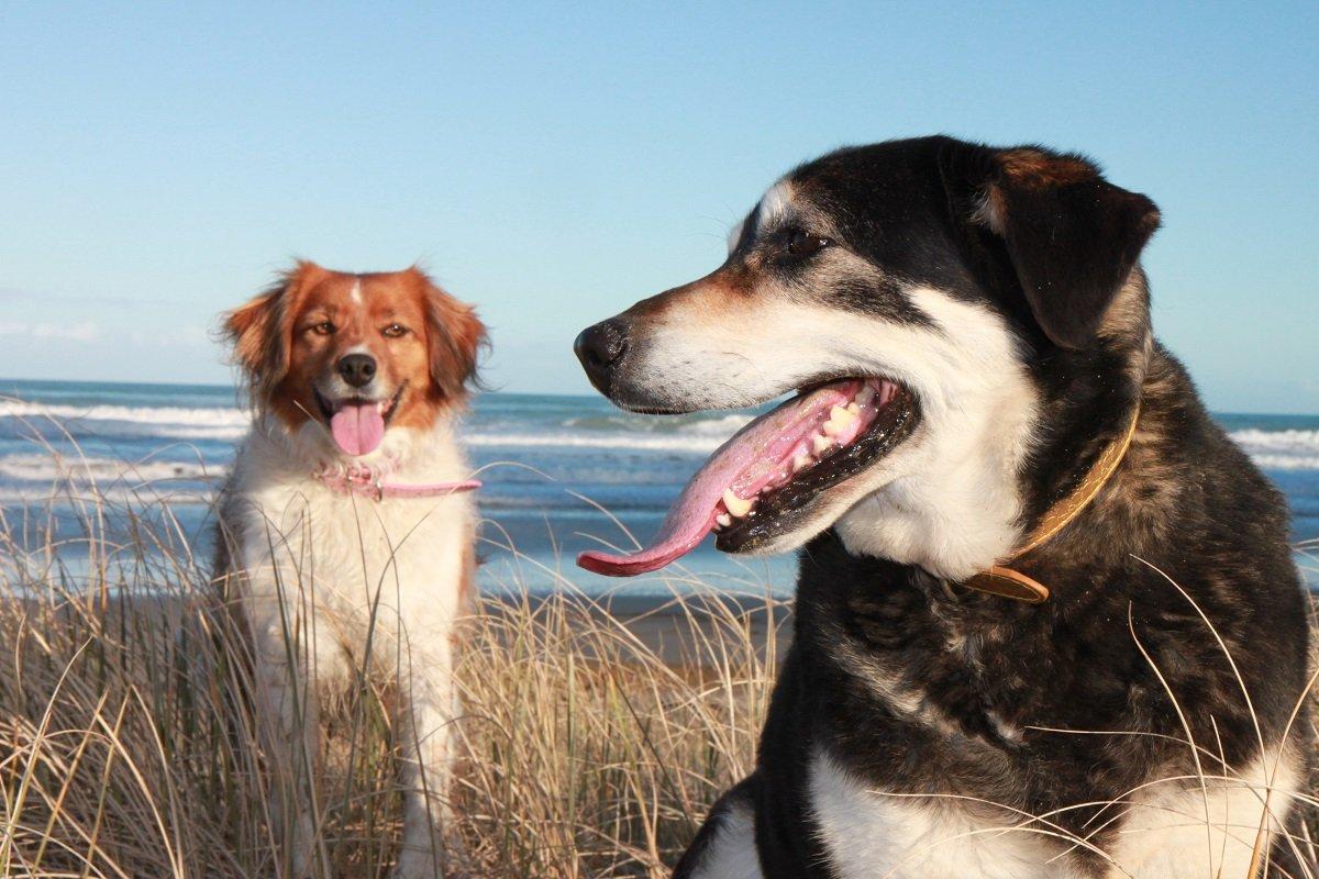 犬にかまれる人の数が減らないニュージーランド…意見が割れるその対策