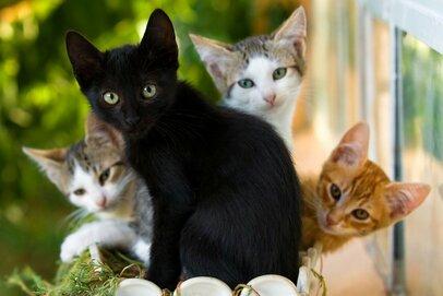 子猫のウェンズデーが保護施設からやってきた〜ニュージーランド流ペット入手法