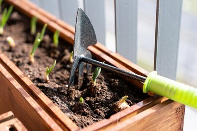 初心者でも育てやすい秋冬野菜オススメ3選!プランターでカンタン家庭菜園