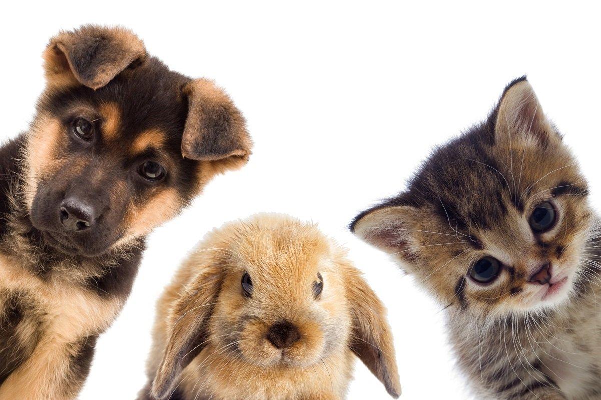 ペットにかかるお金の話。安易に飼って飼育放棄しないために