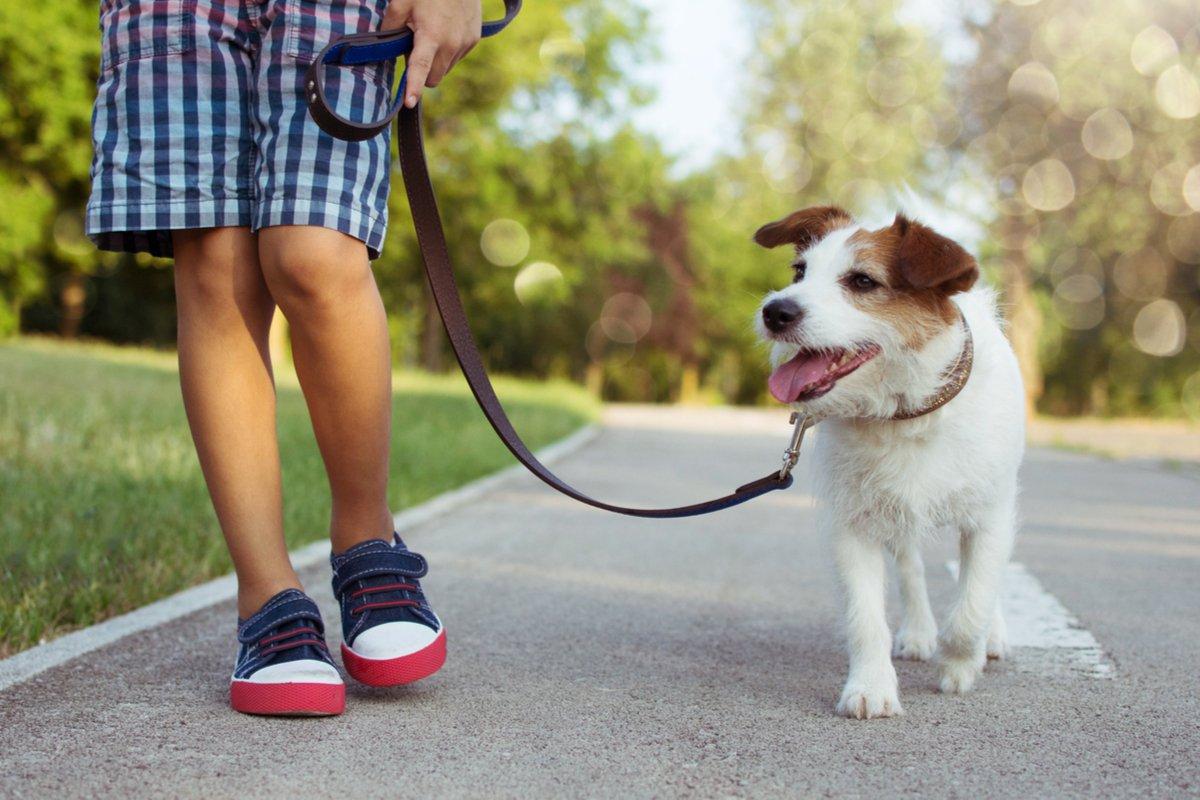 子どもが「犬を飼いたい!」費用は? 環境は? 飼う前に要チェックの4つのポイント