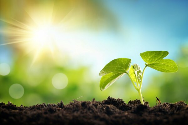 ESG投資のその先へ! 歴史に学ぶ「社会インパクト投資」の可能性