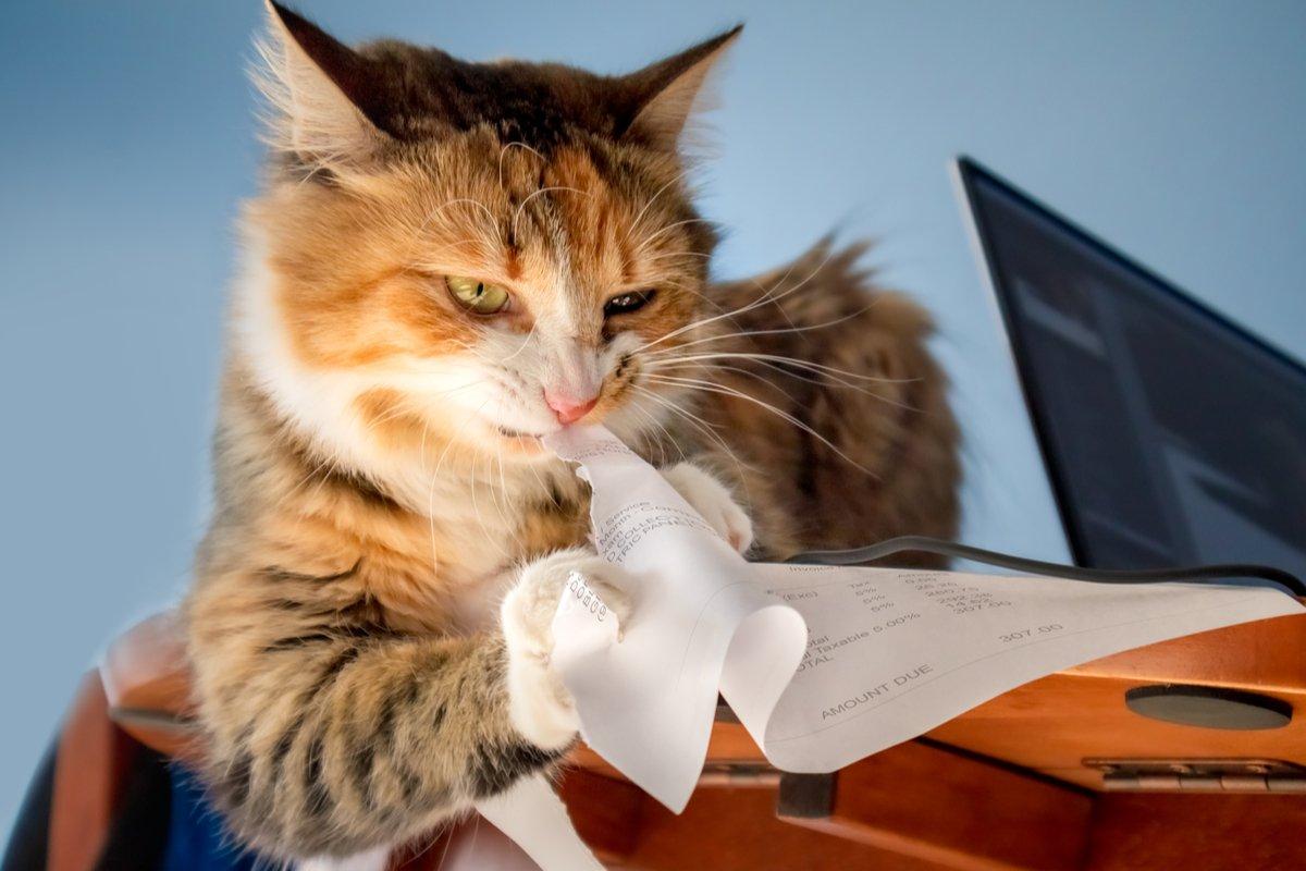 在宅勤務との戦いに敗れた猫さん。やさぐれポーズが全力すぎた♪