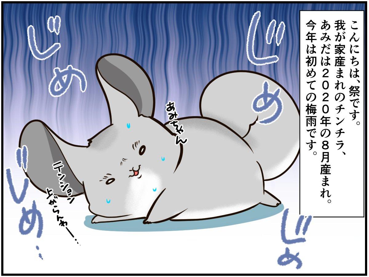 日本生まれのチンチラさん。動物の皆さんが恐怖におののく『日本の夏の風物詩』を初体験【チンチライフ108話】  【マンガ記事】チンチライフ! | LIMO | くらしとお金の経済メディア