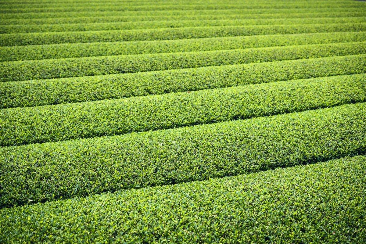世界的ホテルが認める京都の茶園が地道にやっていたこと