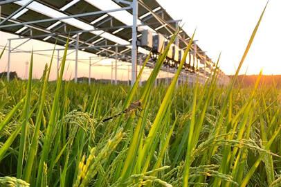 完全無農薬農業を太陽光発電と融合させた男の「思いと戦略」