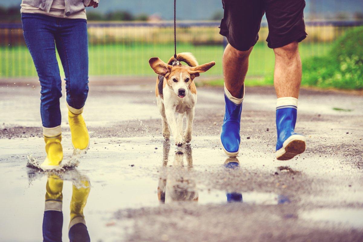 散歩、買い物、自転車「ワークマン」ぱっと羽織れる「超軽量撥水ジャケット」小雨や肌寒いとき