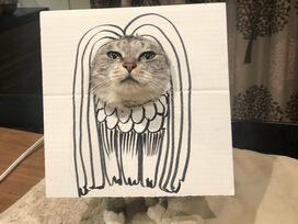 アマビエに扮する猫さんに対する同居猫のシュールな反応が笑いを誘う