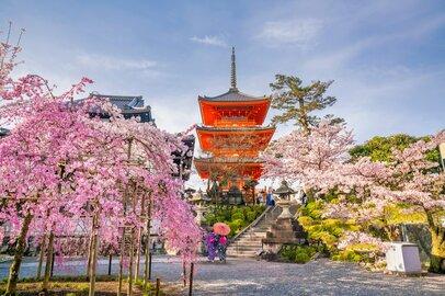 京都大学・経済学部の学生が就職する上位企業ランキング