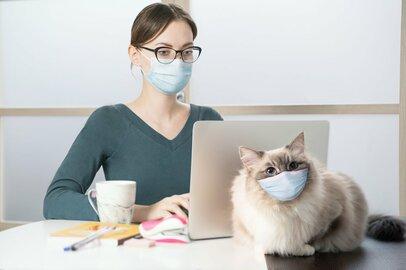 飼い猫がいる状態でコロナに感染したら……対策を考える