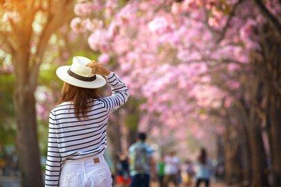 【麻羽たんぽぽの月間占い】4月の金運・仕事運