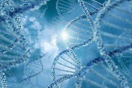 ゲノム解析とゲノム編集で今何が起きているのか
