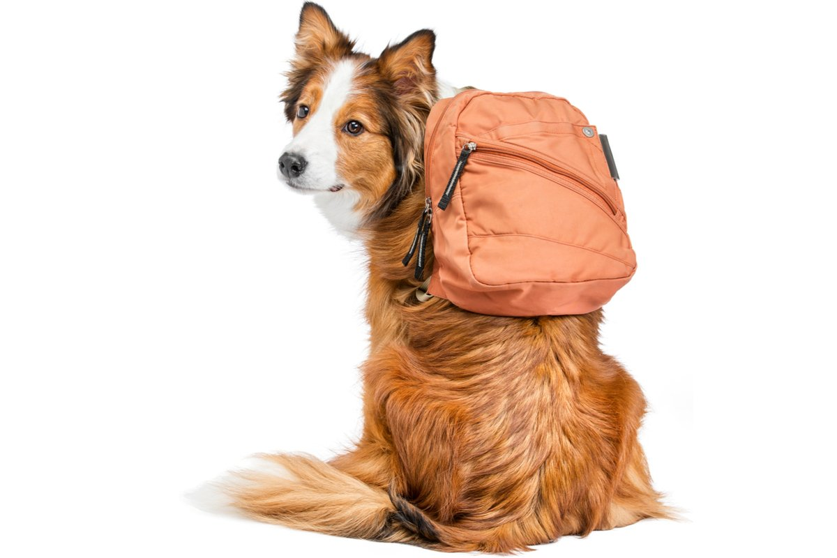 「ペットと一緒の避難生活」にはどんな準備が必要?【犬猫編】
