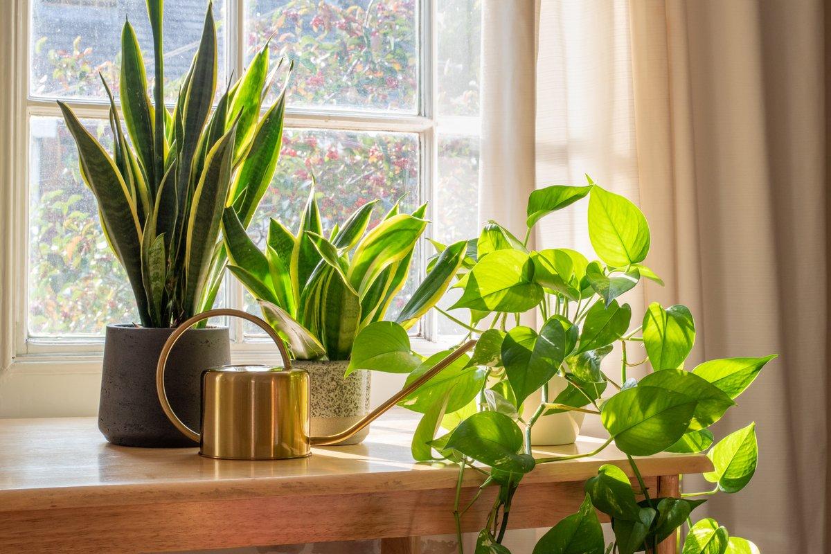 観葉植物の育て方「室内でも枯れさせない!」3つのポイント