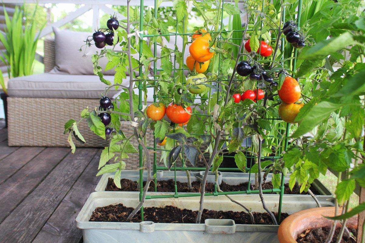 畑がなくても大丈夫!プランターで簡単に始められる家庭菜園