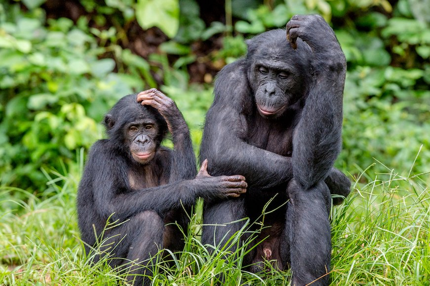 包容力がない猿は、優位に立てない!?