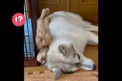 【ハマってる…?】猫ちゃんとワンちゃんの、仲睦まじい動画が可愛すぎる - ツイッターでは「ラブラブ」「愛が詰まった猫犬缶詰」と称賛の声