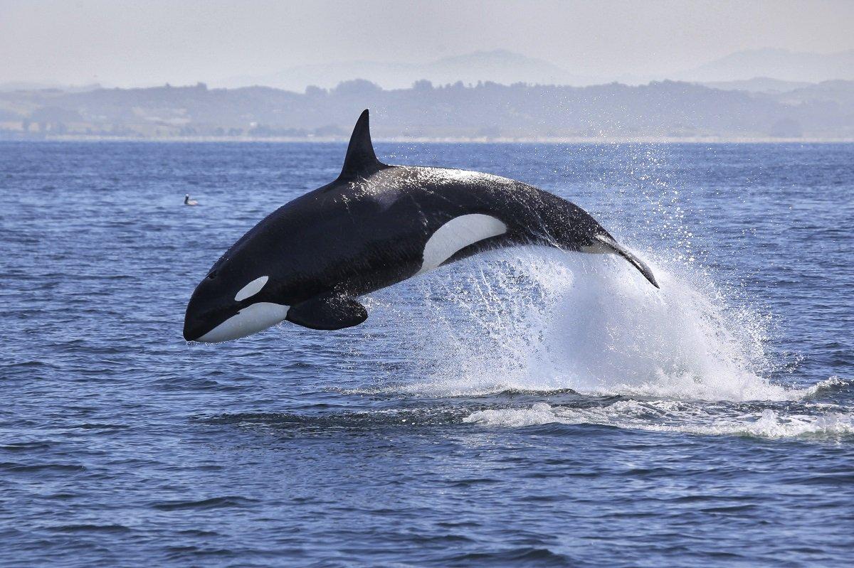 罰金は最高1750万円! 海洋哺乳類を守るニュージーランドの法律とは?