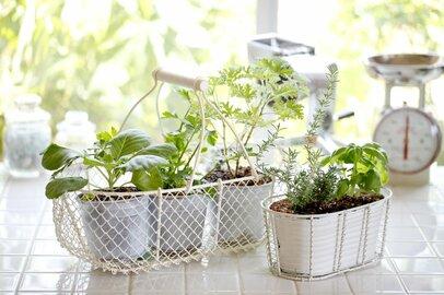 室内で楽しむ家庭菜園!上手に育てるポイント&おすすめ野菜3種