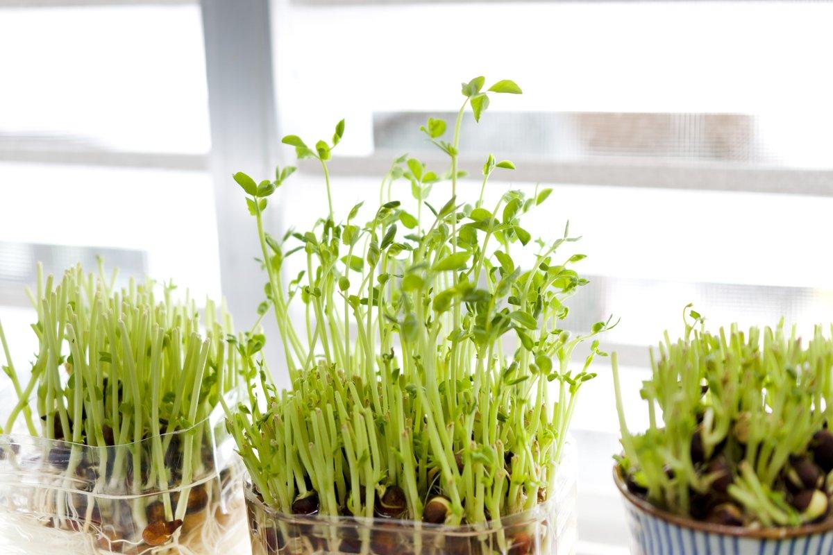 「リボベジ」でプチ節約!初心者でもカンタン栽培できるオススメ野菜4選