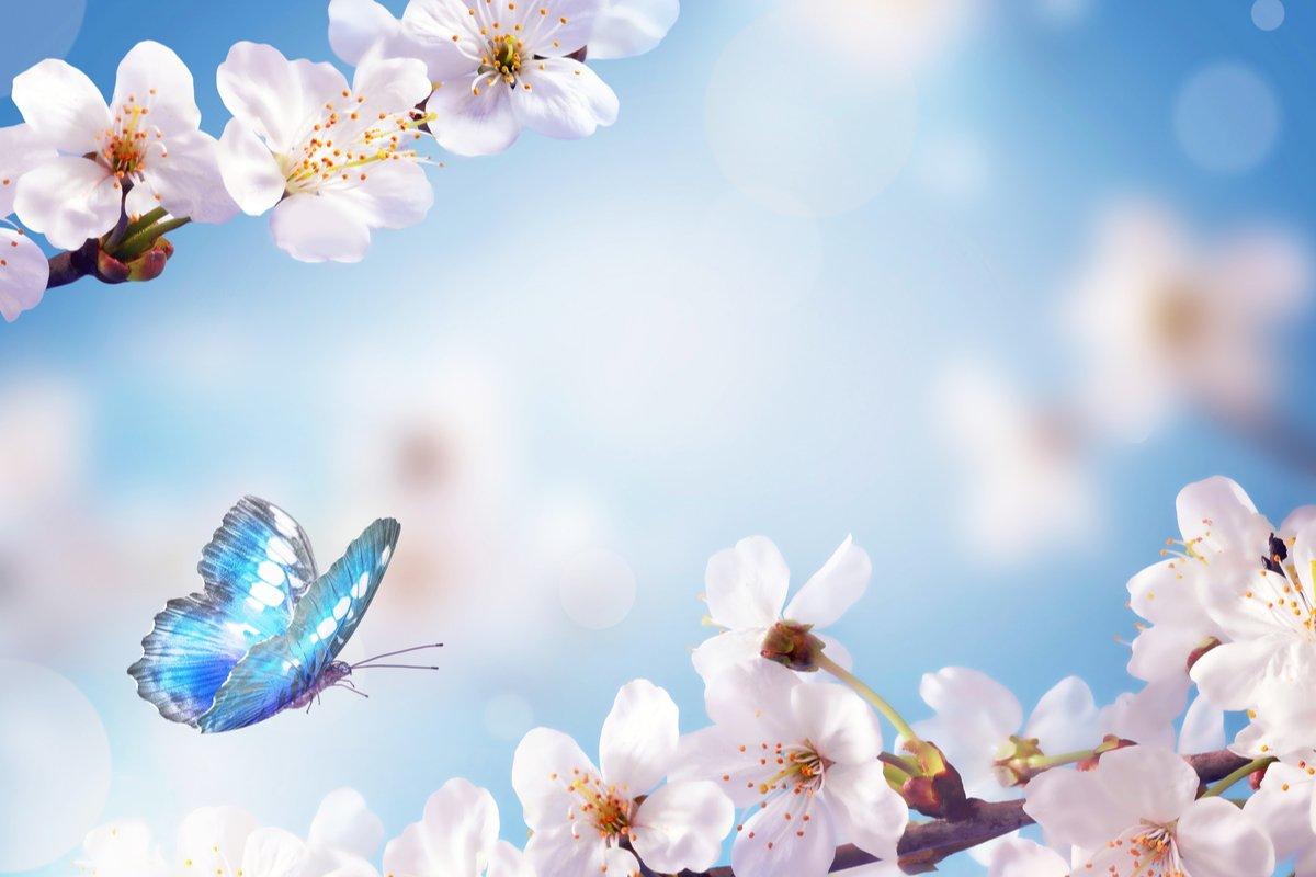 【麻羽たんぽぽの2021年3月12星座占い】金運をよくするために、今「やること」「やめること」