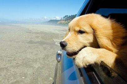 【車購入】いまさら聞けない「サブスクと残クレの違いって何?」