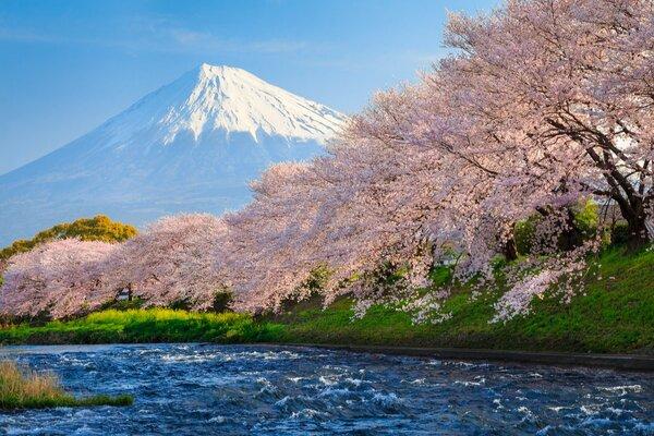 「インバウンド激減危機」は桜の開花時期に本格化? 新型肺炎が花見観光に与える打撃